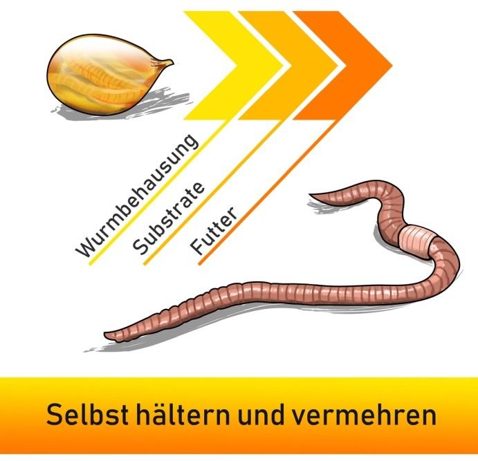 Angelwürmer - Selbst hältern und vermehren